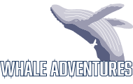 Private Whale Watching & Boat Charter